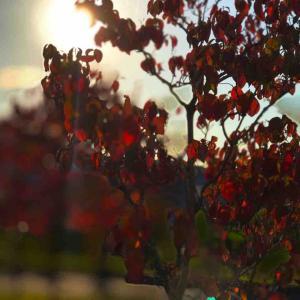 2020年10月28日(水)午前6時の気温9.7度、湿度90%、鳥取市滝山の朝です。 写真はよく晴れた昨日の若葉台の一コマです。