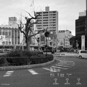 2020年10月31日(土)午前7時の気温6.9度、湿度72%、晴れの予報で迎える鳥取市滝山の寒い朝です。 写真は過日の鳥取駅前広場の一コマです。