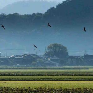 2021年9月13日(月)午前5時の気温21.2度、湿度90%、鳥取市滝山の朝です。 写真は過日撮影し・朝国府の風景です。