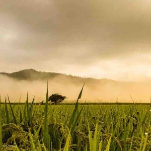 2021年10月19日(火)午前6時の気温8.9度、湿度74%、晴れ上がる空と寒い!鳥取市滝山の朝です。 国府の朝