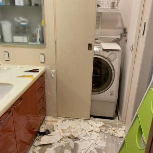 DIY の記録  洗面所・トイレの壁紙張り替え準備