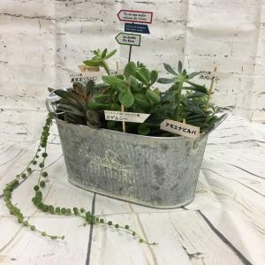 8月 多肉植物の寄せ植え