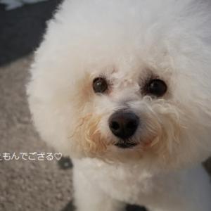 【前半】ほぼ親子とゆく!!軽井沢旅