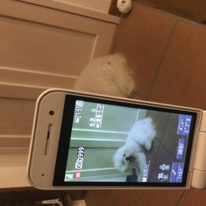 10月岐阜県で「犬祭」があるよ!!