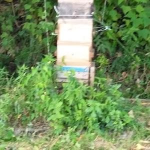 スズメバチ対策!