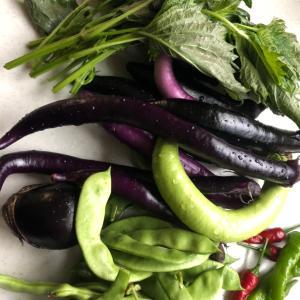 〜新鮮*野菜〜
