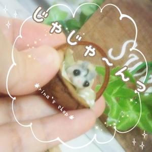 *今日はハムちゃん(о´∀`о)*
