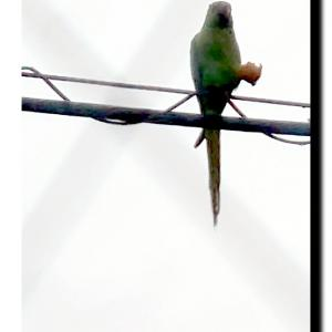 緑色の飛来物⁉️