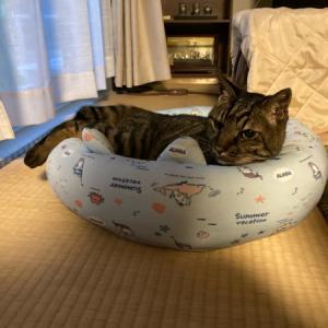 猫サマサマ