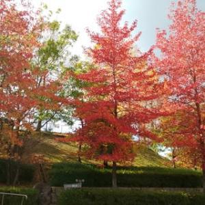 近くの公園も紅葉真っ盛りです