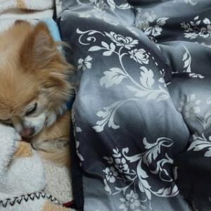 寝てる姿は人間ですね