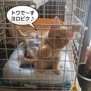 保護猫だったトワちゃんに会ってきました