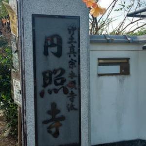円照寺の彼岸花は今が満開!