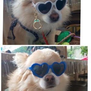 メガネをかけたワンコ達です