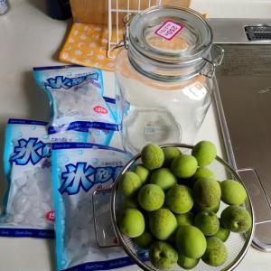 梅シロップ作ってます