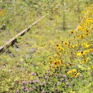 花が咲く鉄路