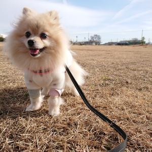 娘との散歩