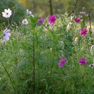 福島市荒井地区に咲く秋の花