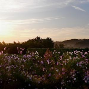 福島市荒井地区に咲く秋の花 ②