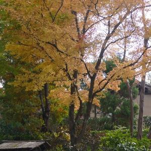 福島市荒井 「民家園の紅葉」