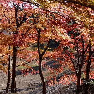 福島県伊達郡桑折町 「半田山自然公園の紅葉」
