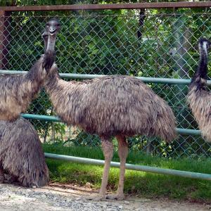 福島県二本松市塩沢 「東北サファリパーク」の動物たち