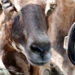 福島県二本松市「東北サファリパーク」の動物たち