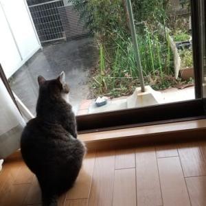 猫は気まぐれ
