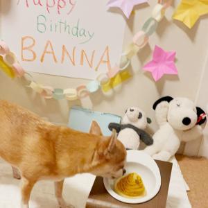 バンナの誕生日ケーキ