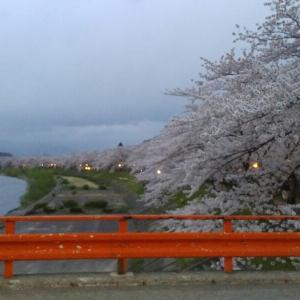 角館の桜 2017(桧木内川堤のソメイヨシノとその他編)