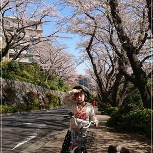 平成最後を彩る満開の桜