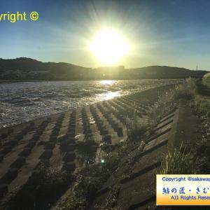 2019/10/13 酒匂川