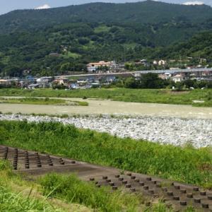 2019/08/17 酒匂川・鮎釣り