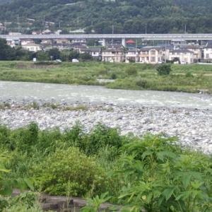 2019/08/19 酒匂川・鮎釣り