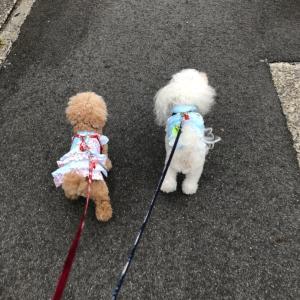 今日のお散歩☆