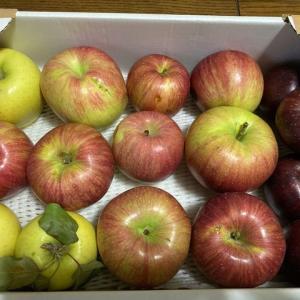 落ちてしまったりんごがものすごく甘いです!