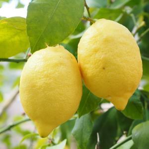 心の音楽療法「浄化してパワフルに」/さわやか&美味しいレモン