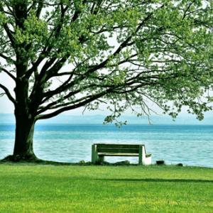 心の音楽療法「たっぷり癒されて」/心に静寂を