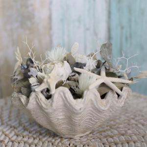 一年中人気の海花シリーズ。シェル型花器がかわいい
