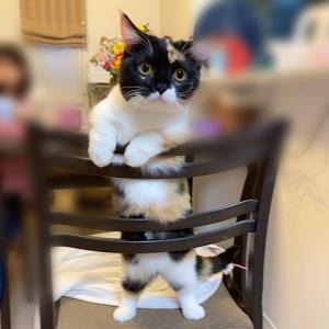 猫の日にちなんでココちゃんの手足