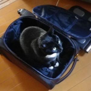 ウバと東京行きます