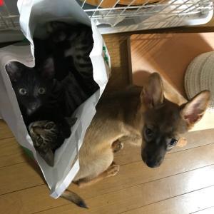 ロコの課題と猫たちの…