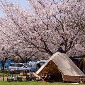 お花見キャンプ♪成田ゆめ牧場①