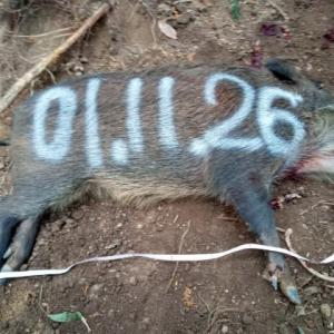 11月26日の有害捕獲