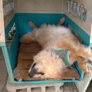 我が家の犬