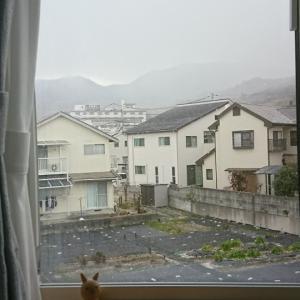 また雪が・・・(;・∀・)