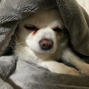 起こしてごめん。