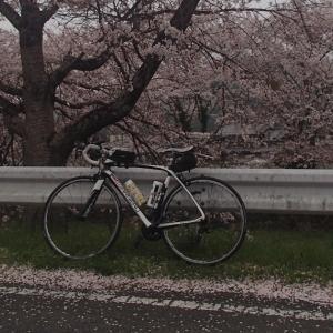 丹波お花見ライドは雨で桜漬け