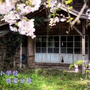 犬居小学校領家分校 ~廃校の桜~