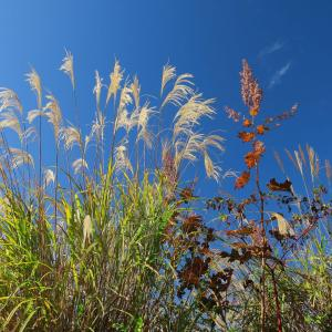 初秋の良き日に里山散歩!(喜連川丘陵)